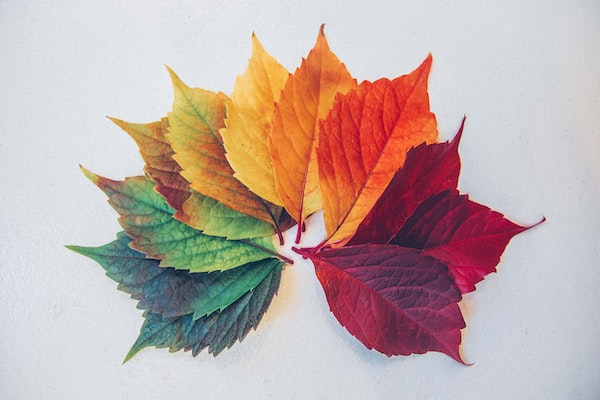 Different colors of leaves in a circle